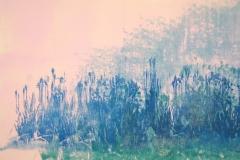 Japanese-Iris-Garden